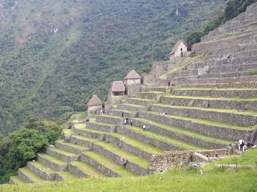 Machu Picchuda taracalar